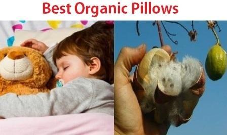 Top 15 Best Organic Pillows in 2019