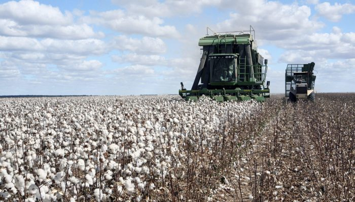 Egyptian Cottons Vs Cotton